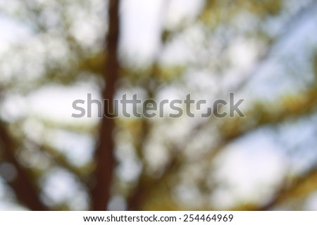 tree nature blur bokeh background