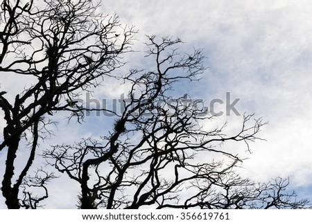 tree, night, outdoor, spring, travel, view, terrible, concept, yellow, magic, curve, shadow, summer, light, old, evening, woods, dusk, twilight, black, clouds, sunshine, dark, forest, spooky, design