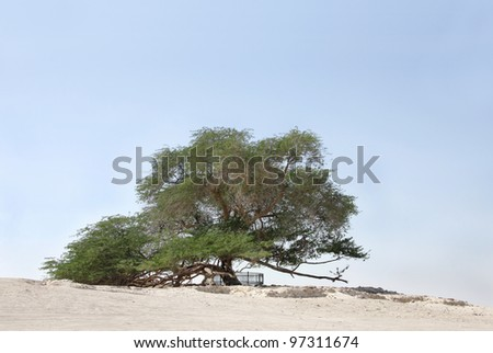 Tree of life, a 400 year-old mesquite tree in Bahrain