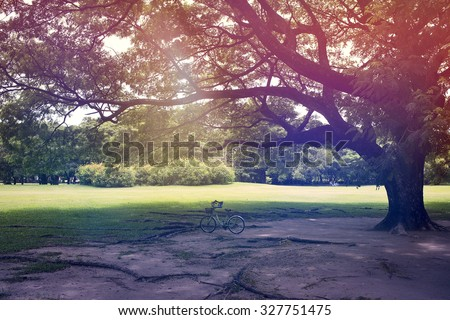 Tree of life. Filtered outdoor scene of bicycle under the tree. Retro look