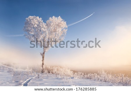 Tree of love with the trace of the aircraft at sunset - stock photo