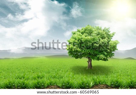 Tree on a grassy meadow - stock photo