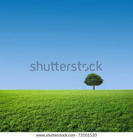 tree on a green meadow - stock photo