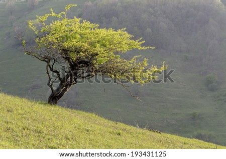 Tree on a hill - stock photo