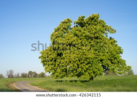 Tree on a meadow and blue sky / tree - stock photo