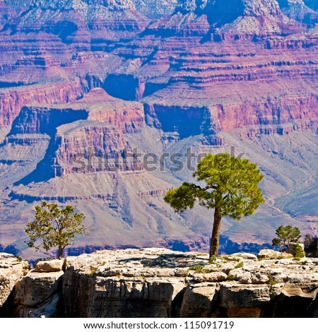 Tree on a rock in front of Grand Canyon, Arizona, USA - stock photo