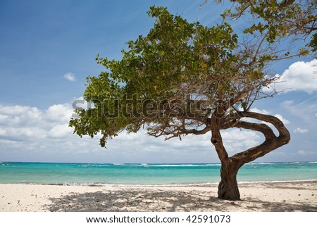 Tree on a sandy beach in Caribbean - stock photo