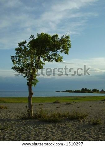 tree on a shore
