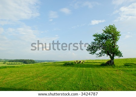 Tree on a spring meadow - stock photo