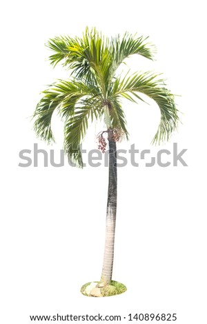 Tree on a white background.