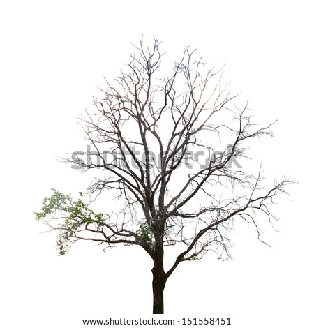 tree on a white background in high definition  - stock photo