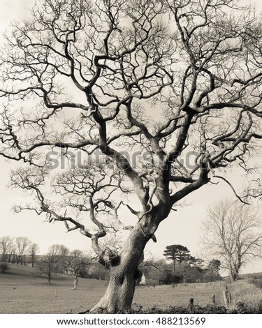Tree on black and white.