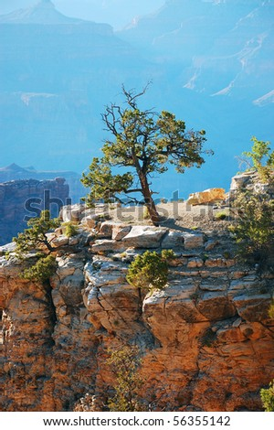 Tree on cliff in the Grand Canyon - stock photo