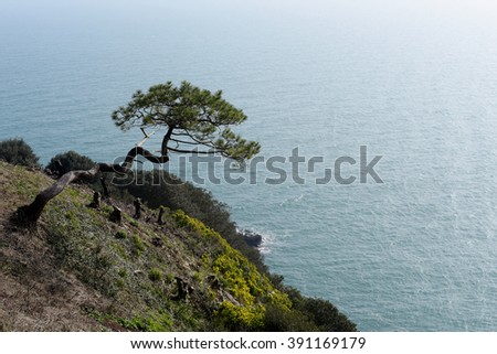 Tree on Cliff, Torquay, South Devon, Cornwall, England, Europe - stock photo