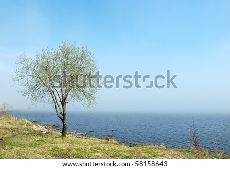 Tree on coast of lake in the spring