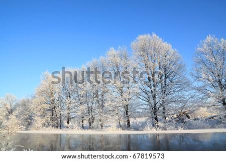 tree on coast river - stock photo
