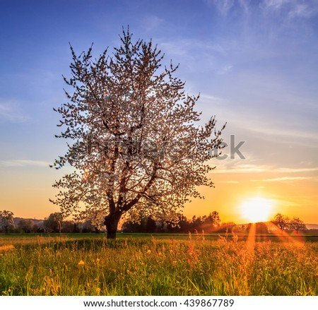 Tree On Field During Sunset With Orange Sun And Sunrays On Field With Blue Saturated Sky