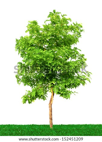 Tree on grass isolated on white background - stock photo