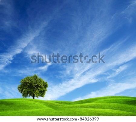 Tree on green field - stock photo