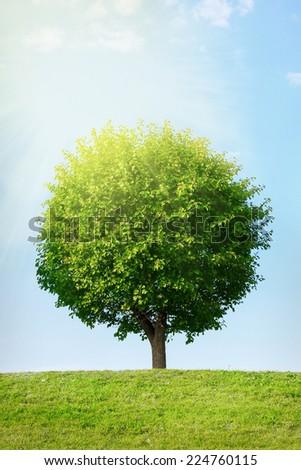 Tree on green field under blue sky - stock photo