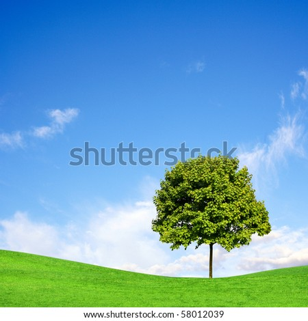 Tree on green field under blue sky - stock photo
