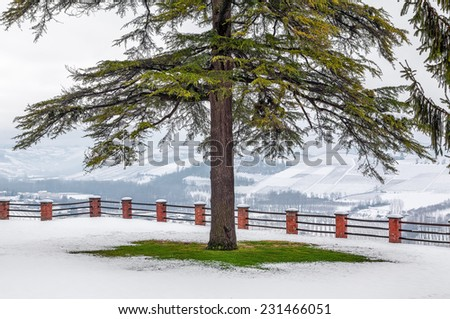 Tree on green lawn covered with white snow in winter in Piedmont, Northern Italy. - stock photo
