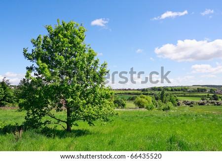 Tree on green meadow - stock photo