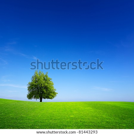 Tree on green meadow - stock photo