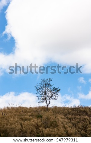 Tree on hill, natural beauty