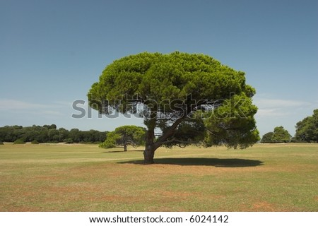 Tree on island Brioni