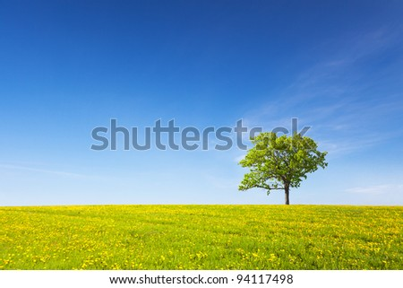tree on meadow - stock photo