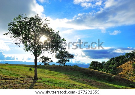 tree on mountain with sunbeam and blue sky - stock photo