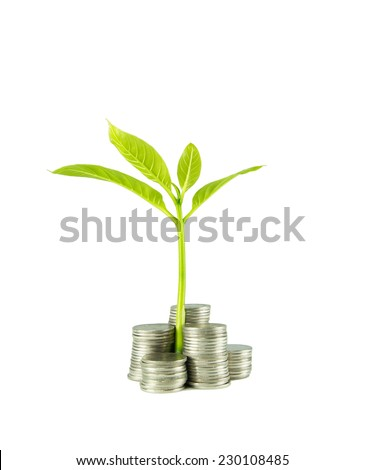 Tree on pile of coins Isolated on white.