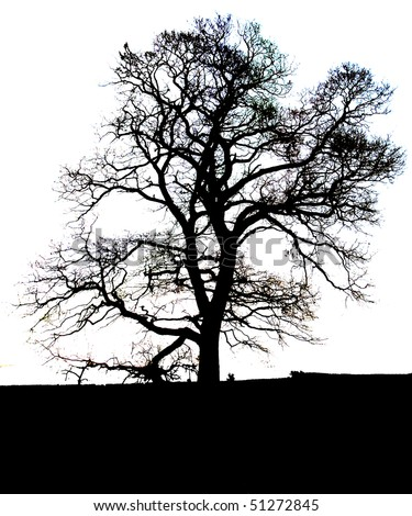 Tree on plain/white background - stock photo