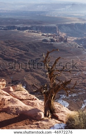 Tree on remote overlook at Canyonlands National Park, Utah - stock photo