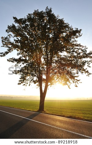 Tree on road at sunset - stock photo