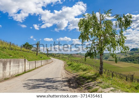 Tree on side-road among green vineyards under blue sky with white clouds in Piedmont, Northern Italy. - stock photo