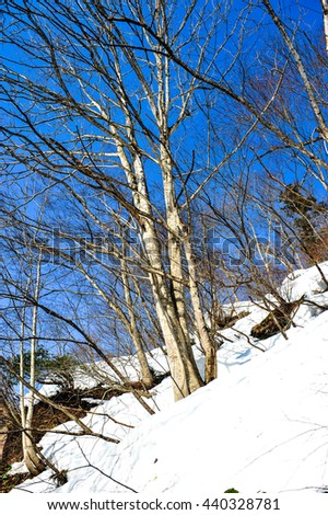 Tree on slope of the snowy mountains - stock photo