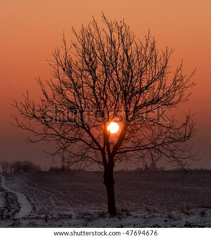 Tree on sunset - stock photo