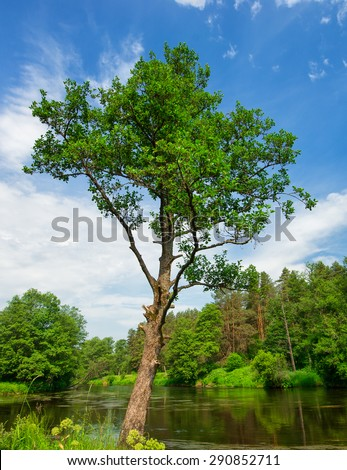 tree on the bank of the river - stock photo