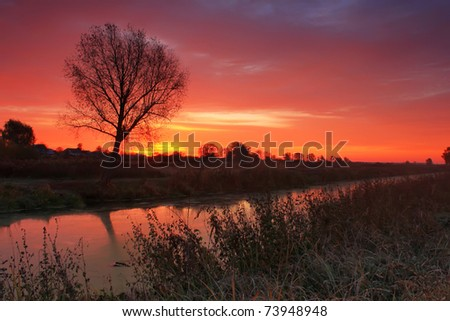 Tree on the bank of the river at dawn - stock photo