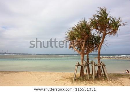 tree on the beach - stock photo