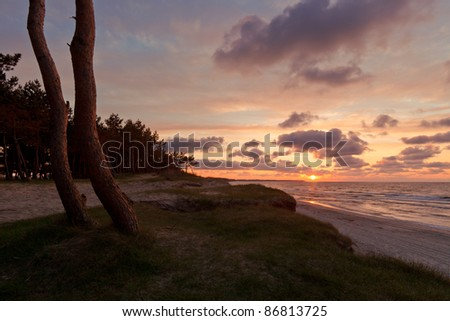 tree on the beach - stock photo