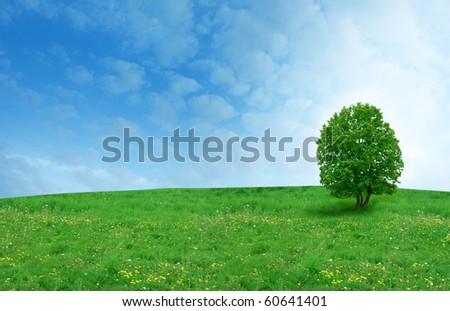 tree on the dandelion field - stock photo