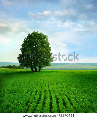 tree on the field - stock photo