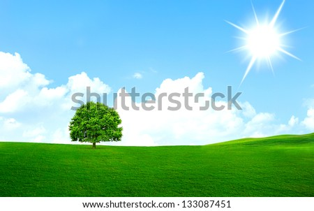 Tree on the green grass with bright sun
