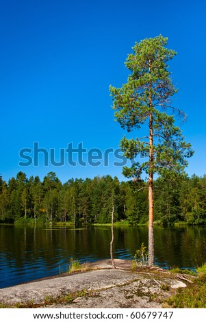 Tree on the lake shore in Finland - stock photo