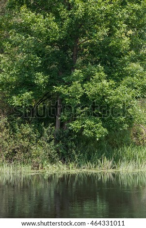Tree on the river bank