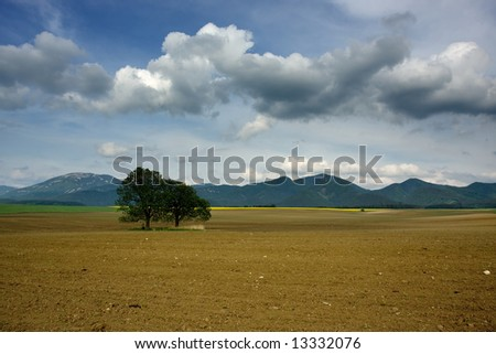 Tree on the spring acre - stock photo