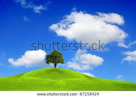 Tree on the top - stock photo